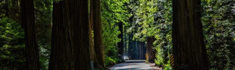 cropped-redwoods-2015-wpheader.jpg